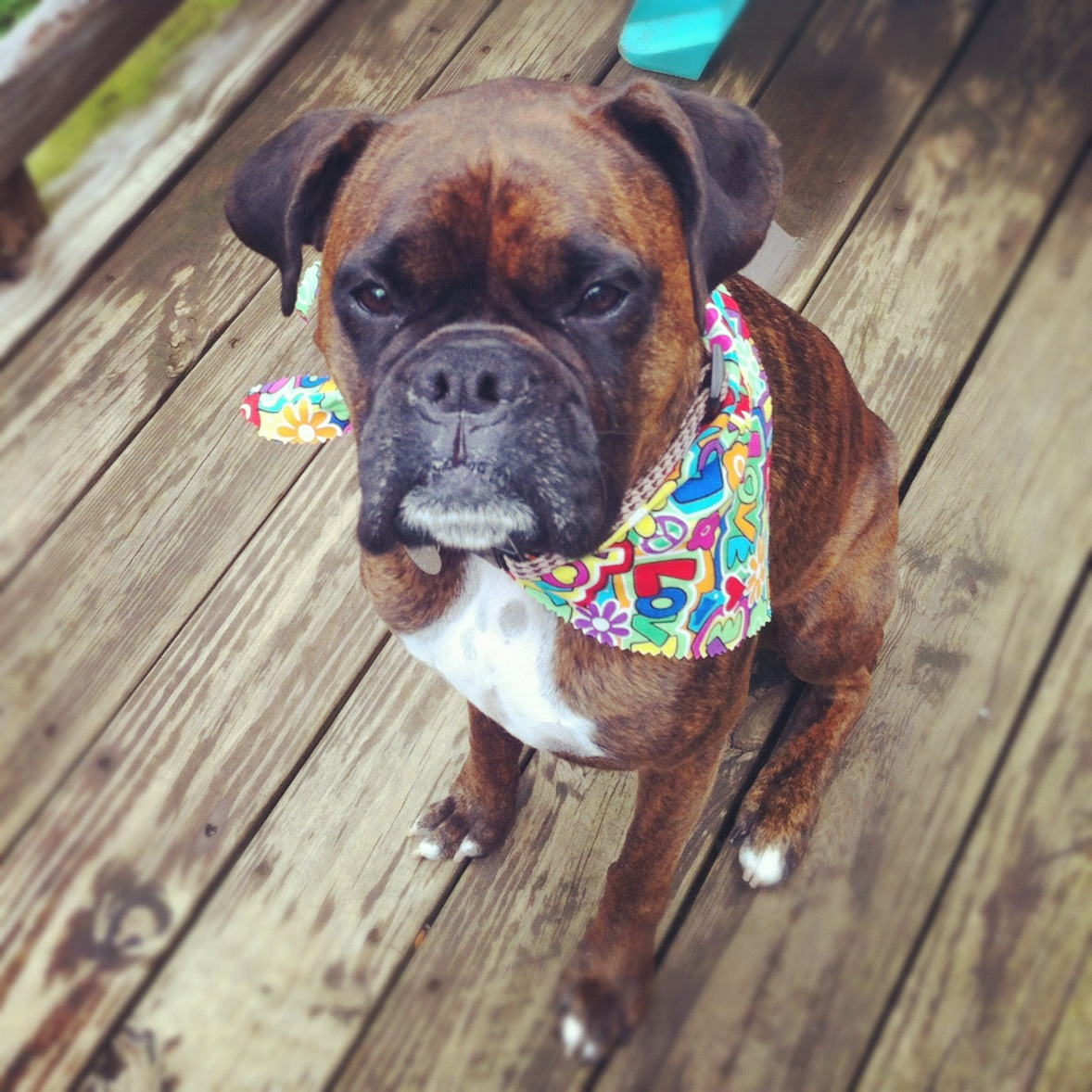 Female Boxer Dog Names And Meanings